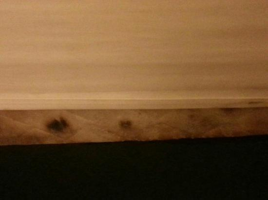 Sun Deck Inn & Suites: Matzatze und Kakerlake