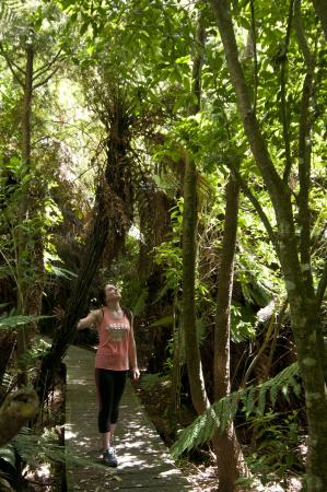 Copthorne Hotel & Resort Solway Park, Wairarapa: Bush Walk