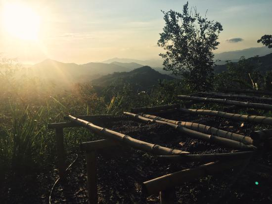 Minca, Colombia: photo1.jpg