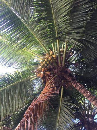 Praslin-øya, Seychellene: photo5.jpg