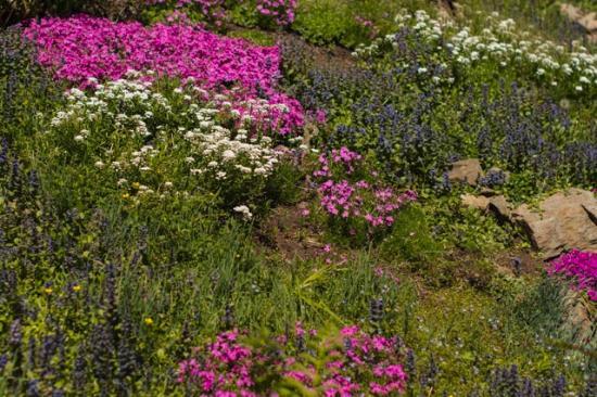 Ohme Gardens: April bloom