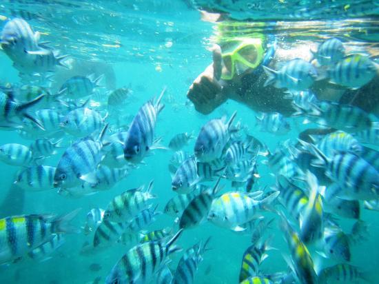 Tanjung Benoa, Indonesië: Snorkeling
