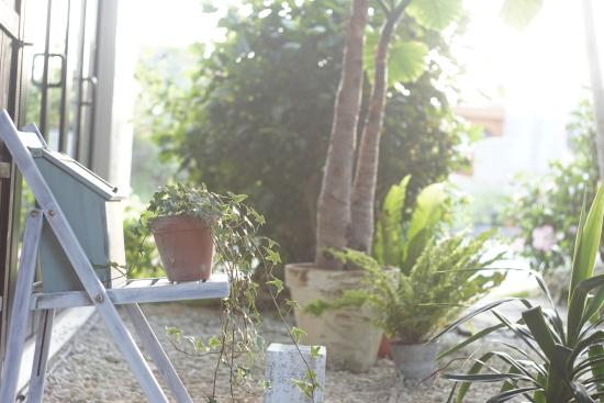 Yacha Yacha : お庭のポスト
