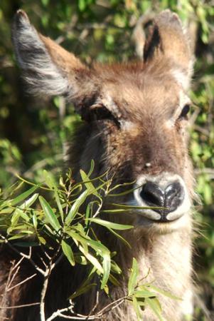 艾馬科西野生動物園旅館照片