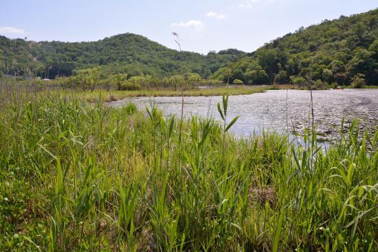 Midorogaike Pond