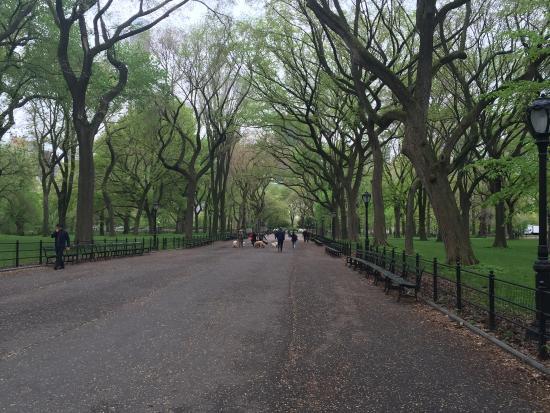 Central Park Sunset Tours: photo1.jpg