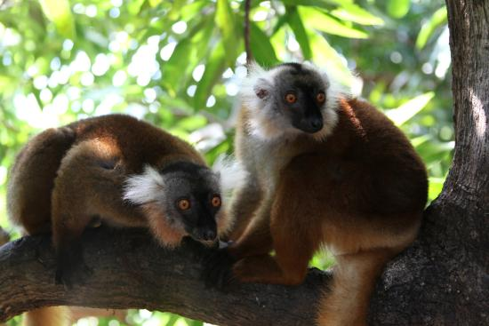 Black Lemur Sanctuary