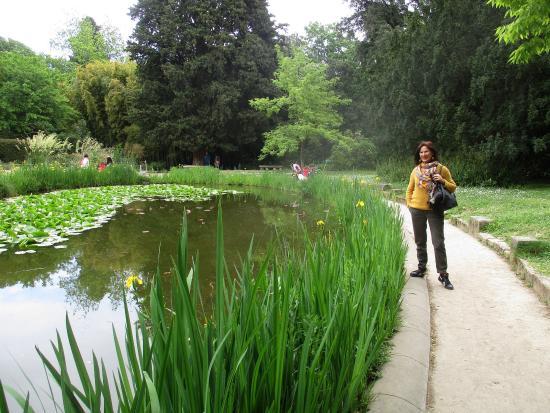 Mare au jardin des plantes