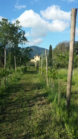 Villa Il Paradisino: 20160501_182653_large.jpg