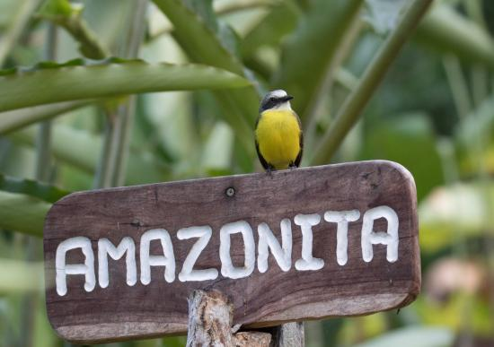 Osa Rainforest Rentals: Welcome to Amazonita!