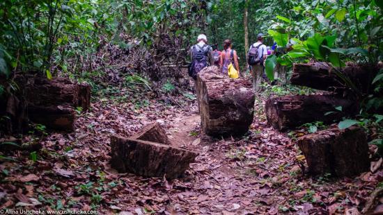 Κόλπος Drake, Κόστα Ρίκα: Сквозь джунгли лежали наши тропы. Национальный парк Корковадо, Коста-Рика