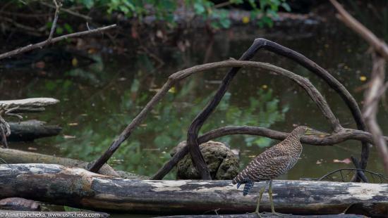 Drake Bay, Costa Rica: Озера и птицы Коста-Рики. Национальный парк Корковадо, Коста-Рика