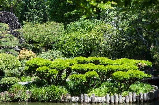 Japanese Tea Garden View Across The Pond Picture Of The
