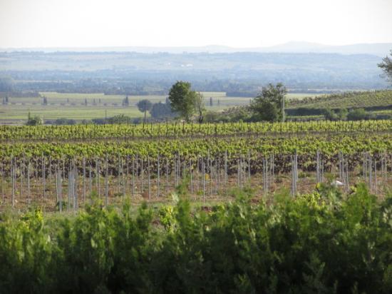 Hotel Restaurant Bellerive: Zoom on the grape vines