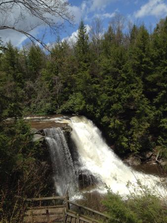 Swallow Falls State Park: Muddy Creek Falls - tallest falls in Maryland