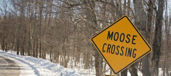 moose crossing sign picture of maple leaf inn barnard tripadvisor