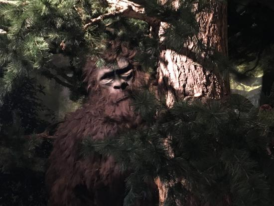 "Bailey, CO: ""Boomer' the Bigfoot"
