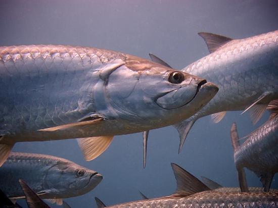 Bahia Divers