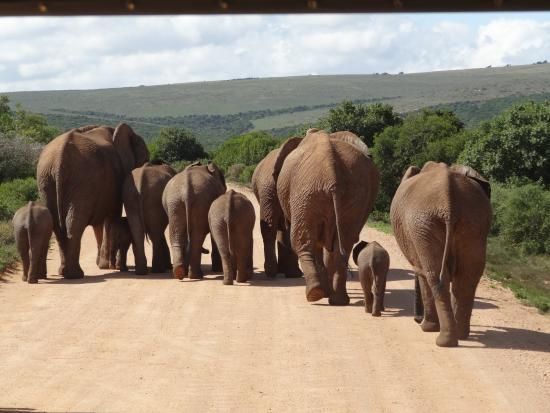 safari to addo with saul