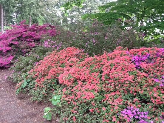 Rhododendron Species Botanical Garden Picture
