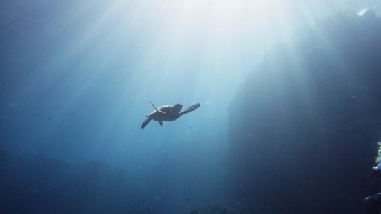 Blue Wilderness Dive Adventures: Sunshine filtering through the water column