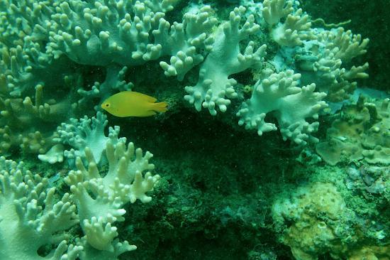 Bali Diving Perdana & Marine Sport