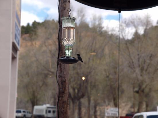Mount Carmel, UT: Hummingbirds at the feeders outside of the windows