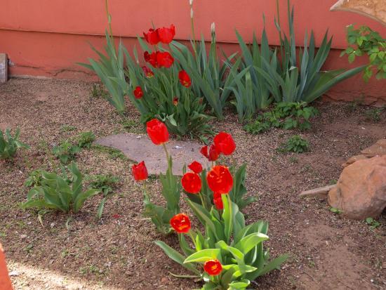 Mount Carmel, Utah: Tulips grow here in spring