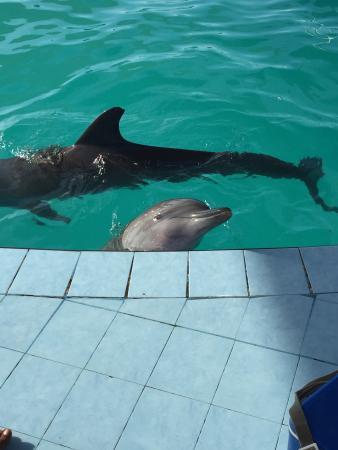 Wake Dolphin