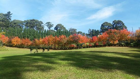 Wildwood Gardens
