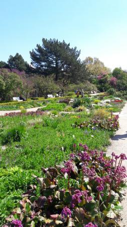 Botanischer Garten Berlin Picture Of Botanischer Garten Berlin