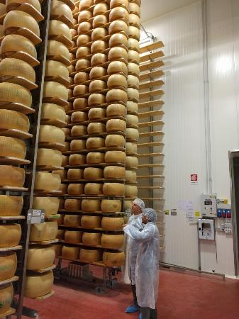 Golosaitalia Day Tours: Frederico and my husband looking at the 40,000 wheels of cheese in storage for 2-3 years