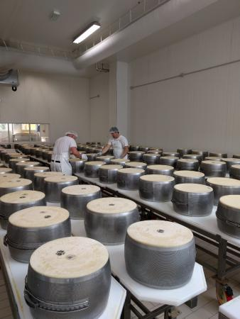 Golosaitalia Day Tours: The cheese is turned, flipped and tightened (90 lbs ea) here every 2 hours for 2 weeks.
