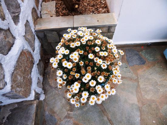 Aquarius Village Hotel: flowers all around our lush garden
