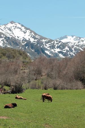 Pola de Somiedo, Spania: Ganadería en paisaje de la zona