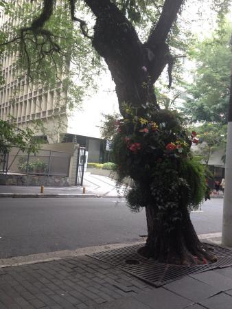 Haddock Lobo Street : Linda. A floricultura em frente à padaria bela paulista só aumenta o charme da rua.