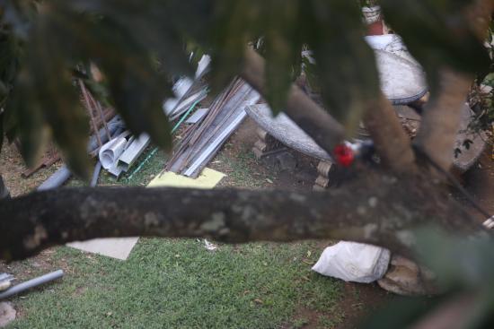 Grecia, Costa Rica: Vue sur le beau jardin !!!