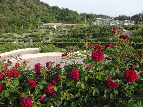 Hanasaki Farm / David Austin Roses