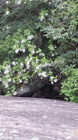 Roaring Gap, Karolina Północna: Stone Mtn Falls with overhanging Fringe Tree