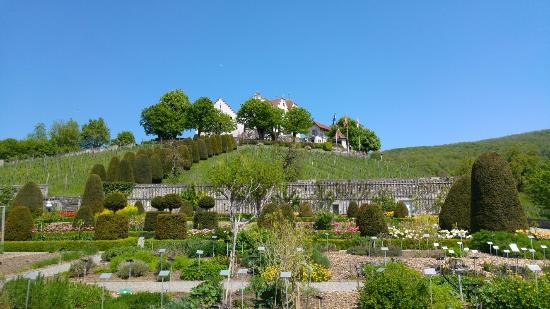 Schloss Wildegg-Museum Aargau: 20160507_125057_large.jpg