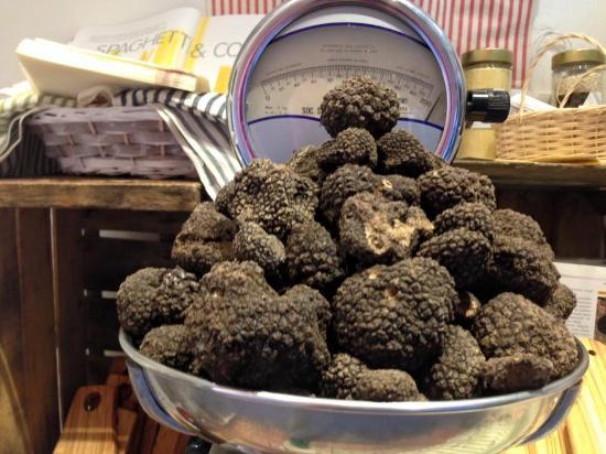 Siena Tartufi (truffle hunting)