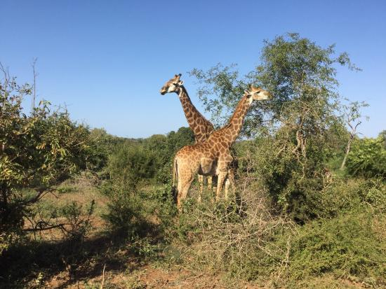 Марлот-Парк, Южная Африка: photo0.jpg