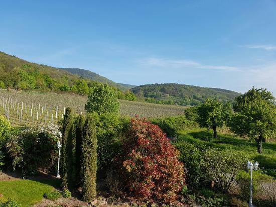 Gastehaus-Weingut Helbighof