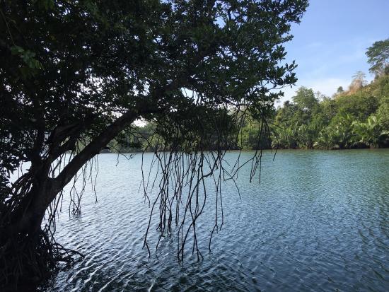 Palawan Mangrove Resort: photo2.jpg