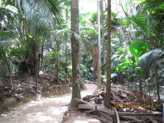 Praslin-øya, Seychellene: В заповеднике