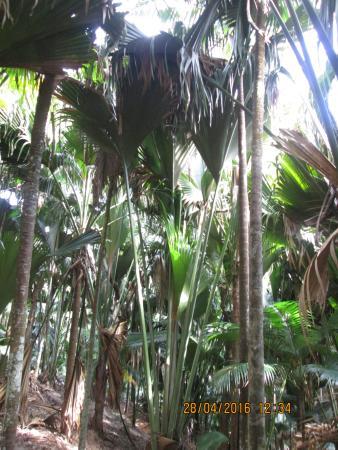 Isola di Praslin, Seychelles: В заповеднике