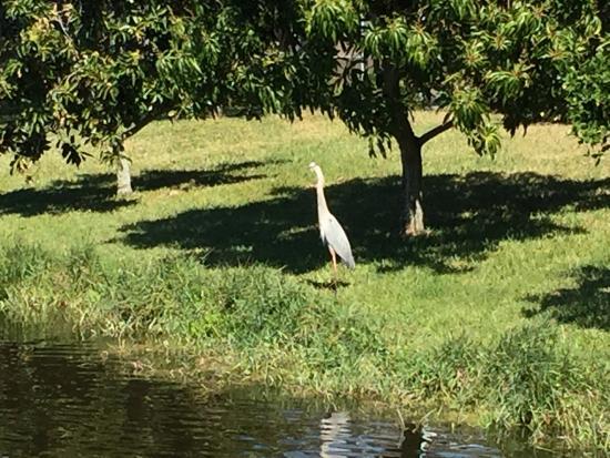 The Savannahs Golf Course: nice view