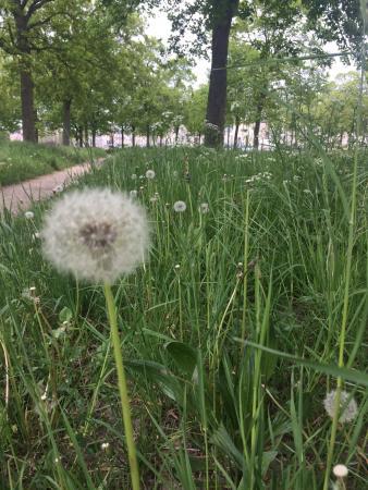 Paris, France: Dandelion moments abound ...