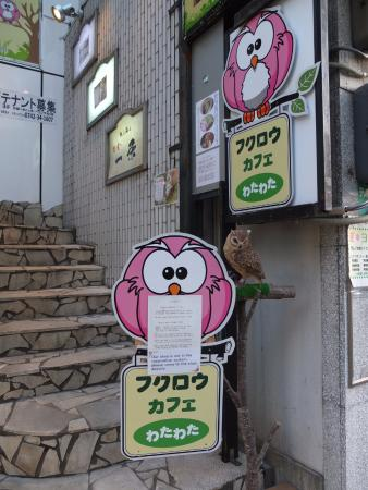 sign of the cafe from the street level 奈良市 フクロウカフェ わた