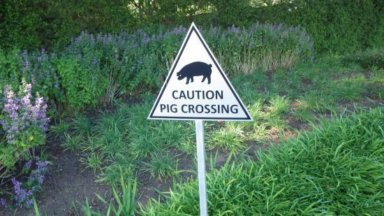 Tokai, Sydafrika: Traffic Signs ... loved them!
